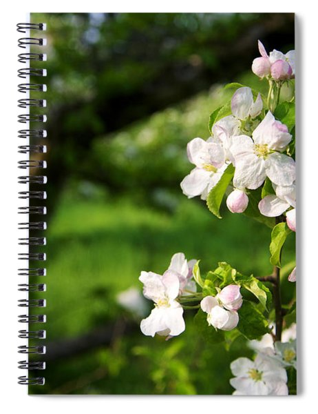 Apple Blossoms In The Orchard Spiral Notebook