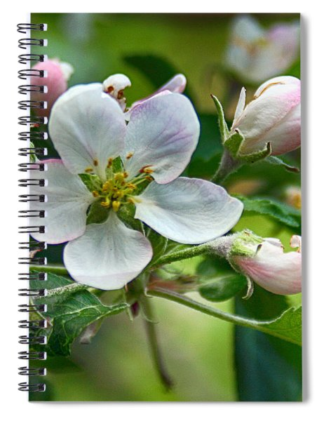 Apple Blossom And Buds Spiral Notebook