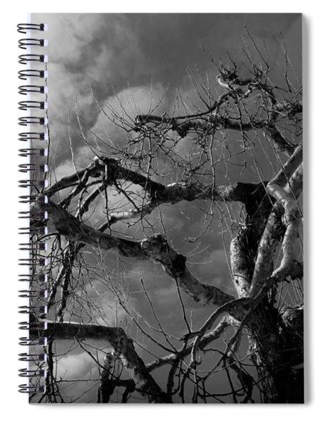 Apple Tree Bw Spiral Notebook