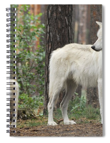 Arctic Wolf With Pup, Canis Lupus Albus Spiral Notebook