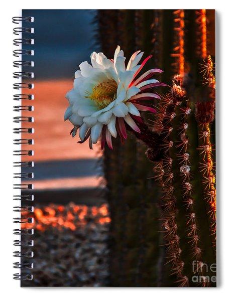 Argentine Cactus Spiral Notebook