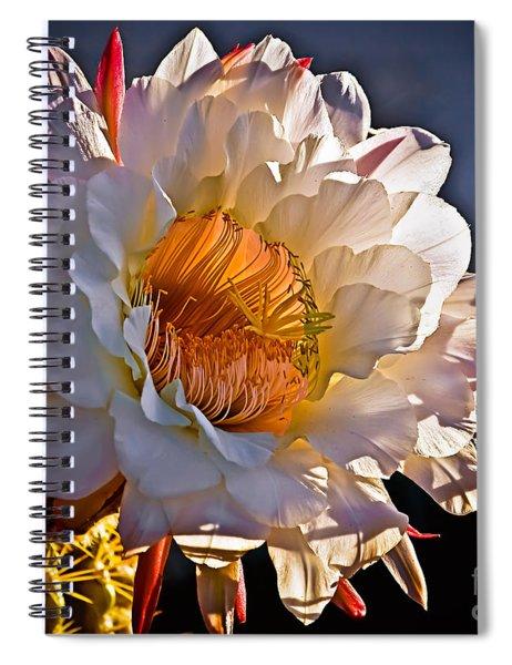 Argentine Giant II Spiral Notebook