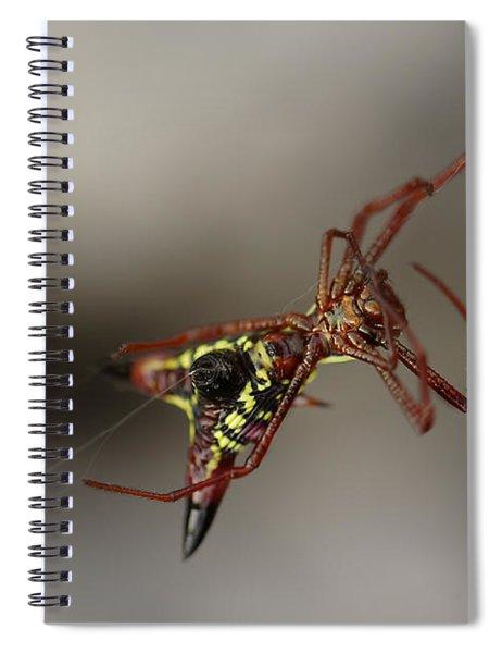 Arrow-shaped Micrathena Spider Starting A Web Spiral Notebook