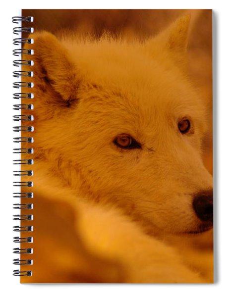 Artic Wolf  Spiral Notebook