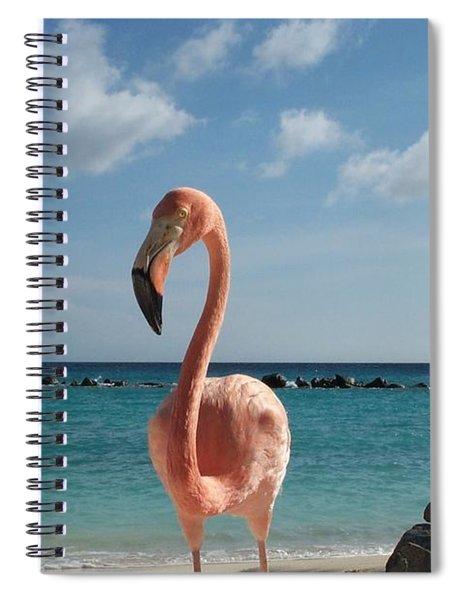 Aruba Hairy Eyeball Spiral Notebook