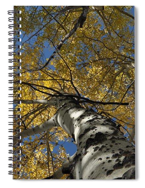 Fall Aspen Spiral Notebook