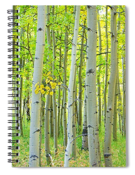 Aspen Tree Forest Autumn Time  Spiral Notebook