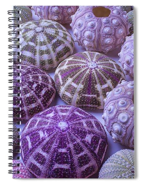 Assorted Sea Urchins Spiral Notebook