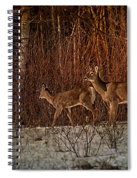 At The Edge Of The Woods Spiral Notebook