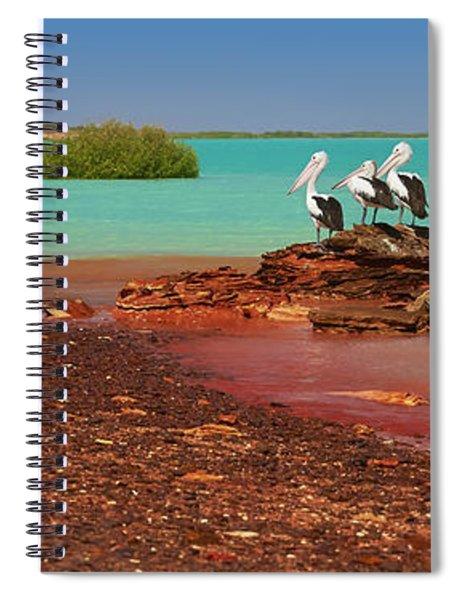 Australian Pelicans Roebuck Bay Spiral Notebook