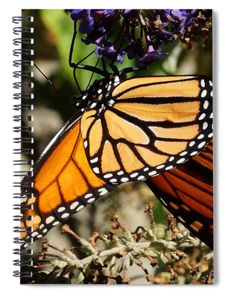 Autumn Butterfly Spiral Notebook