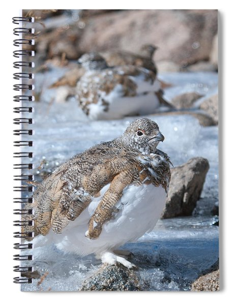 Autumn Plumage White-tailed Ptarmigan Spiral Notebook