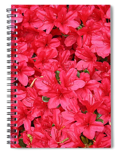Azalea In Bloom Spiral Notebook