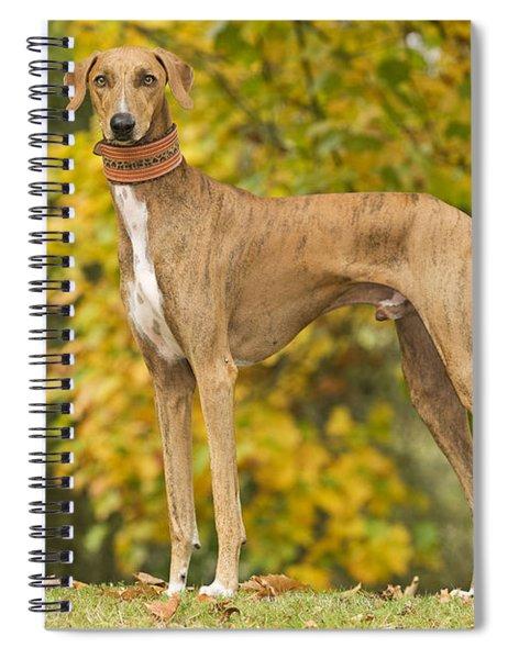 Azawakh Dog Spiral Notebook