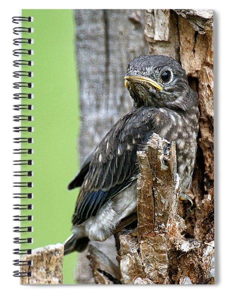 Baby Bluebird Spiral Notebook