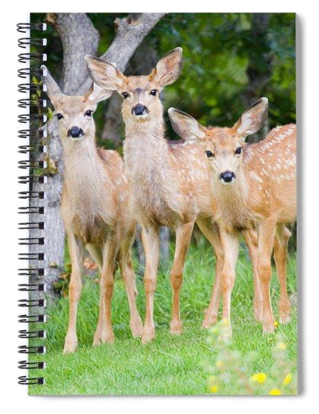 Baby Deer Spiral Notebook