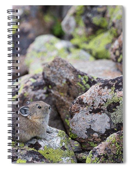 Baby Pika Spiral Notebook