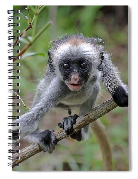 Baby Red Colobus Monkey Spiral Notebook