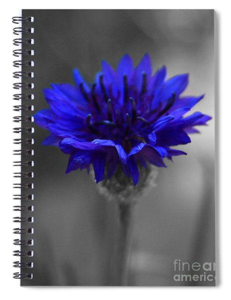Bachelor's Button Spiral Notebook