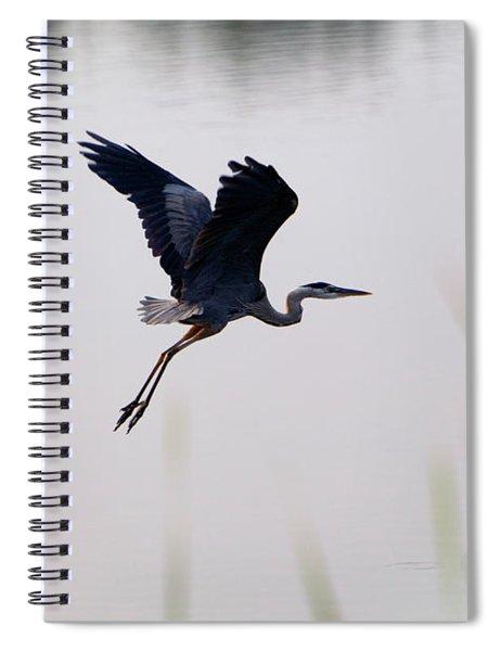 Back Lit Great Blue Heron Ardea Spiral Notebook