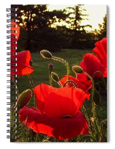 Backlit Red Poppies Spiral Notebook