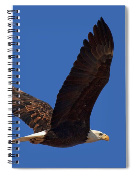 Bald Eagle Fly By Spiral Notebook