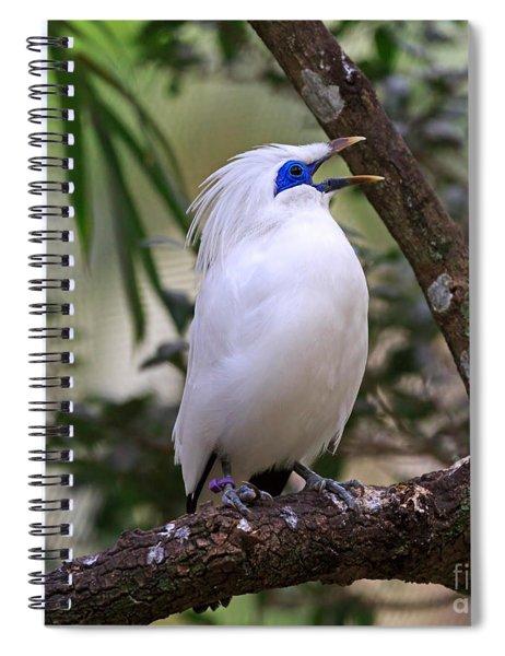 Bali Myna Spiral Notebook