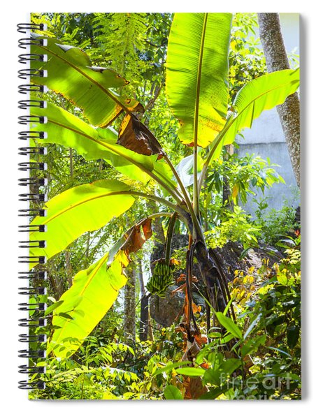 Banana Palm Tree With Luminous Shine Spiral Notebook