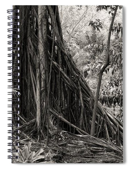 Strangler Fig And Cypress Tree Spiral Notebook