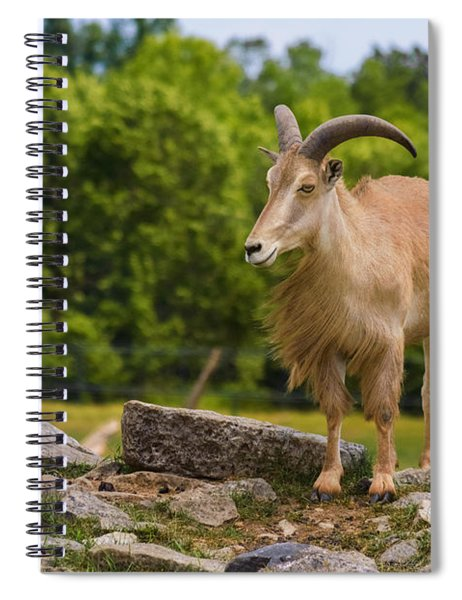 Spiral Notebook featuring the photograph Barbary Sheep by Garvin Hunter