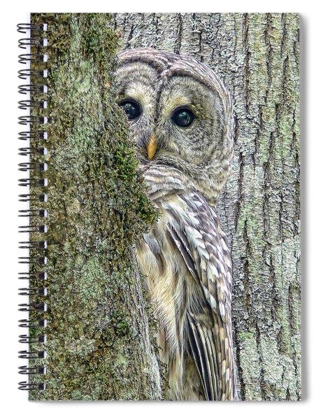 Barred Owl Peek A Boo Spiral Notebook