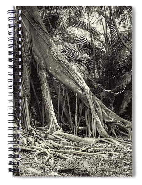 Strangler Fig Spiral Notebook
