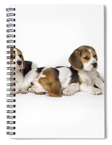 Beagle Puppies, Row Of Three, Second Spiral Notebook