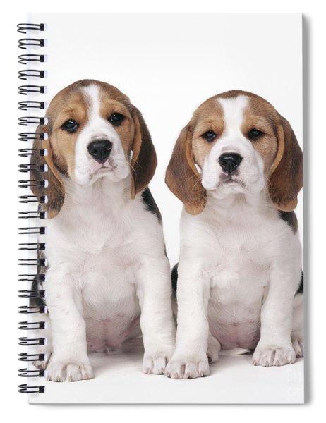 Beagle Puppy Dogs Spiral Notebook