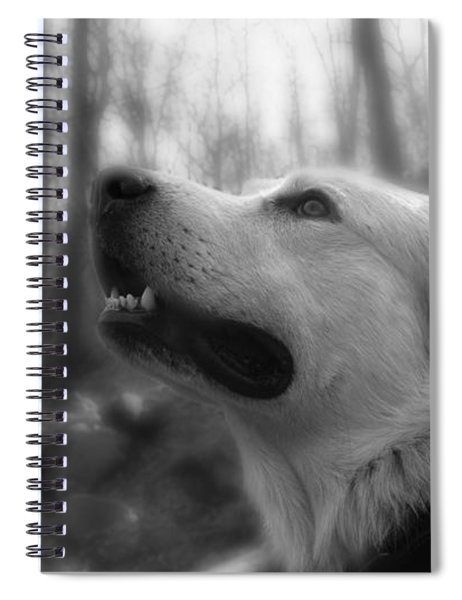 Bear Tooth Not Camera Shy Spiral Notebook