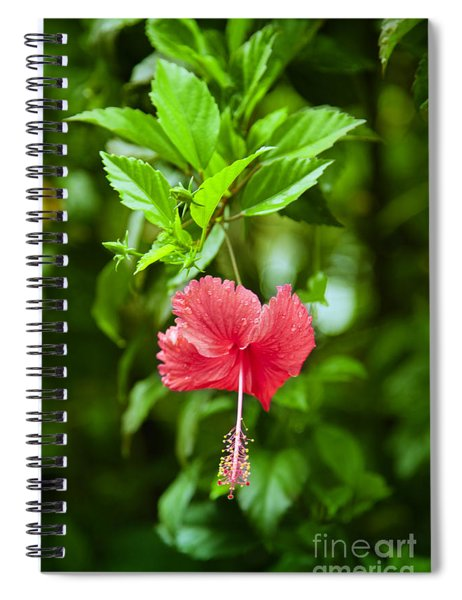 Beautiful Blossom Spiral Notebook