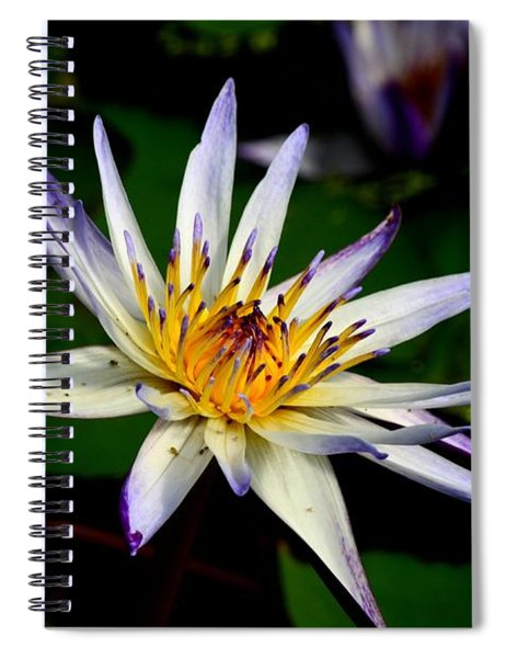 Beautiful Violet White And Yellow Water Lily Flower Spiral Notebook
