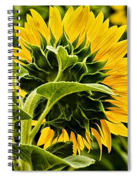 Beauty From The Back Spiral Notebook