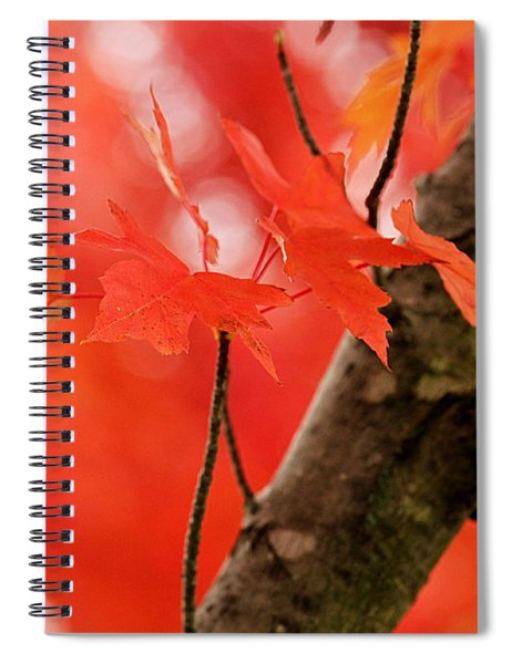 Beauty Of Red Spiral Notebook