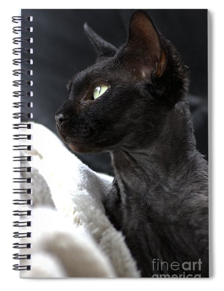 Beauty Of The Rex Cat Spiral Notebook