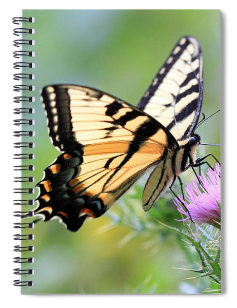 Beauty On Wings Spiral Notebook