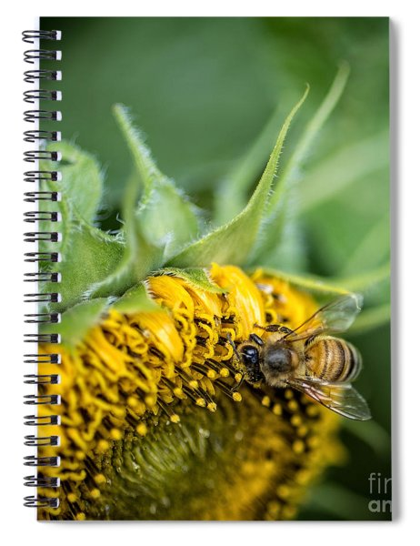 Bee Collecting Pollen On A Sunflower Spiral Notebook