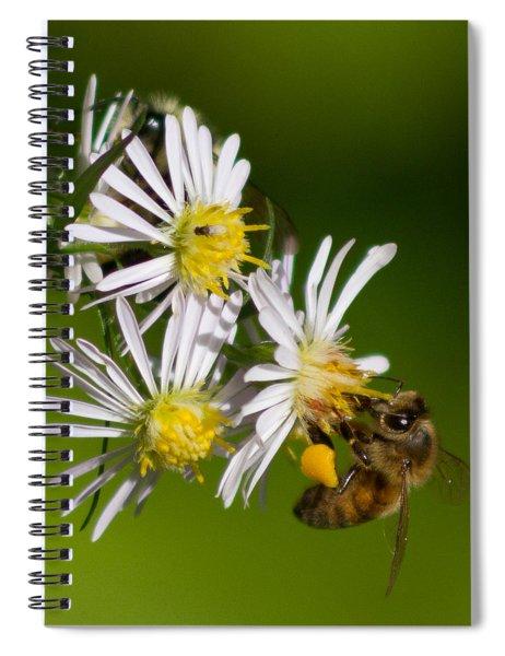 Bee Harvest Spiral Notebook