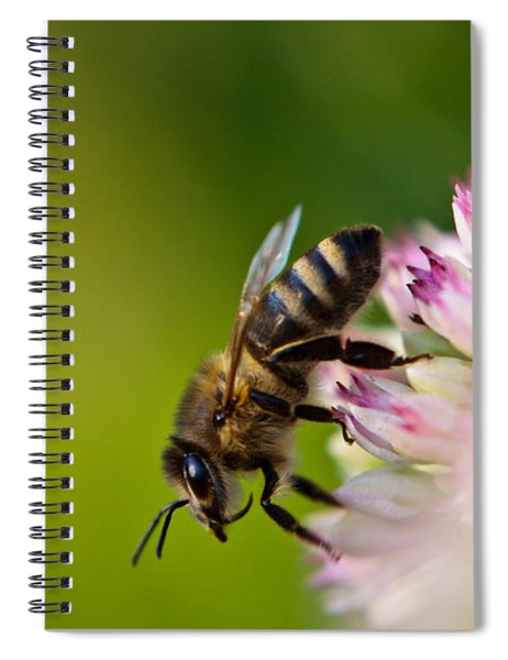 Bee Sitting On A Flower Spiral Notebook
