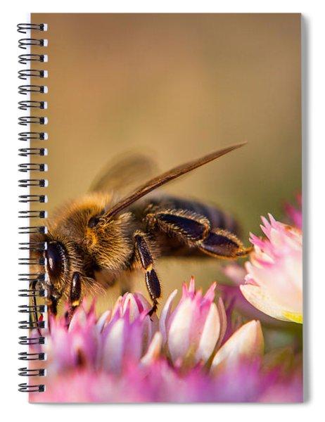 Bee Sitting On Flower Spiral Notebook