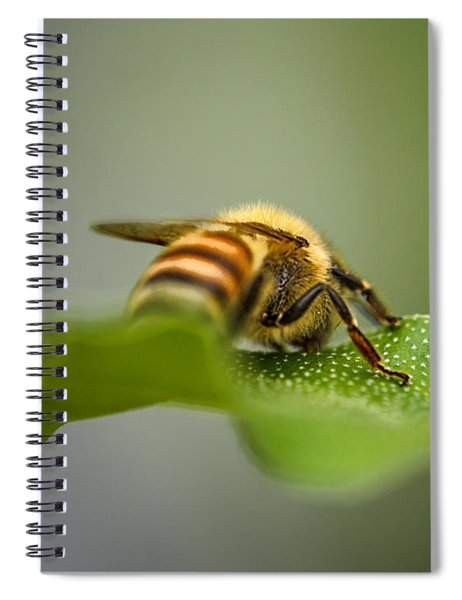 Bee Still Spiral Notebook