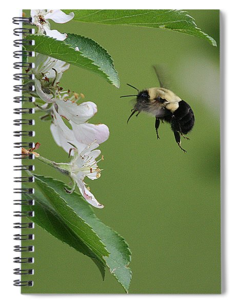 Bee With Apple Blossoms Spiral Notebook