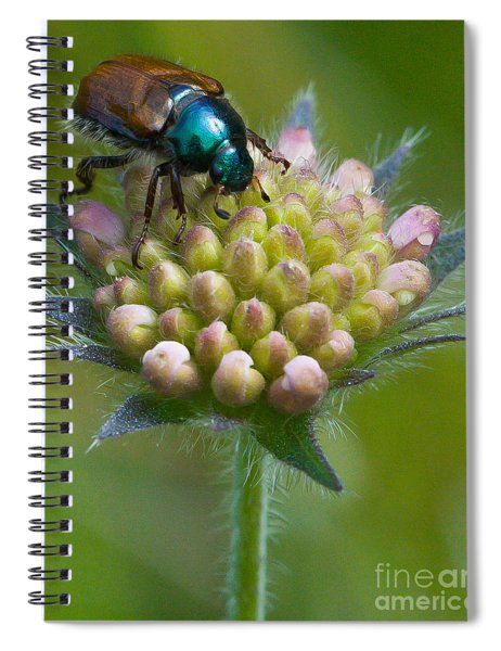 Beetle Sitting On Flower Spiral Notebook
