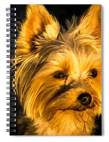 Bella The Wonder Dog Spiral Notebook