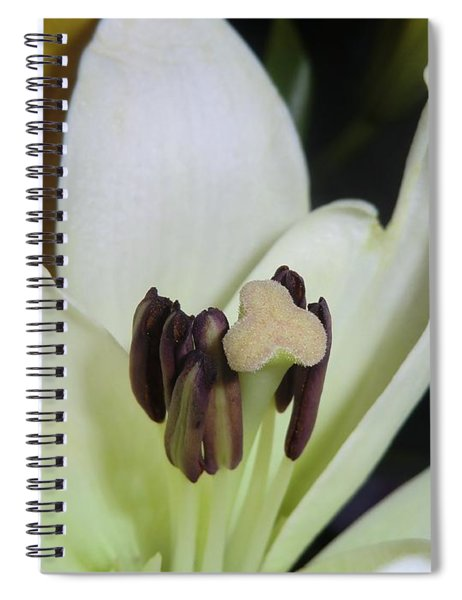 Beyond Perfection Spiral Notebook